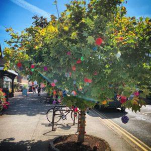Cranleigh pom pom tree