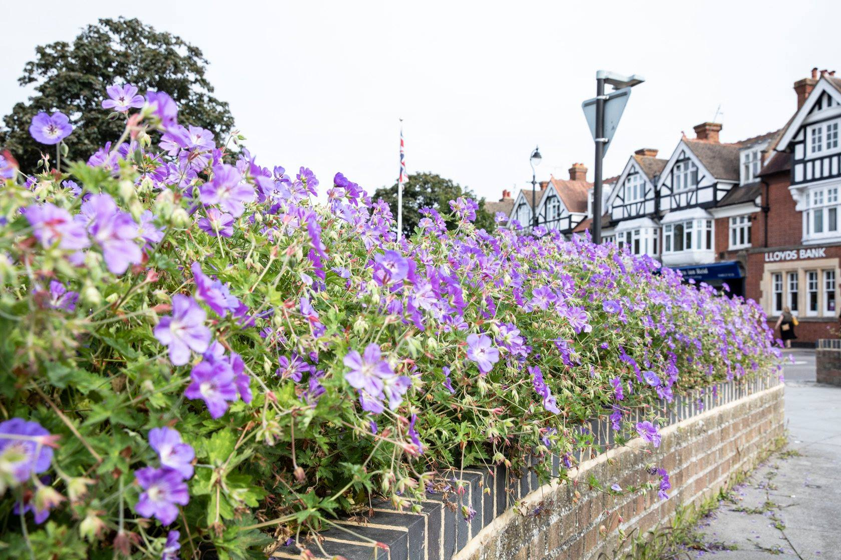 What has Cranleigh in Bloom done this year?